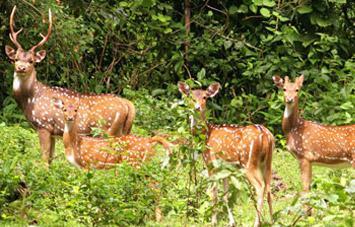 Koshi Tappu Wildlife Reserve