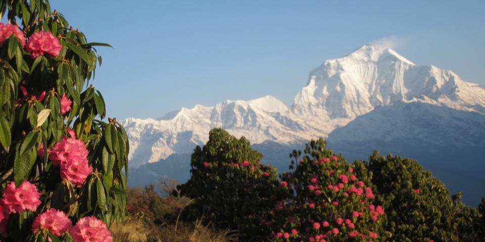 Annapurna ( Sanctuary ) Base Camp Trekking