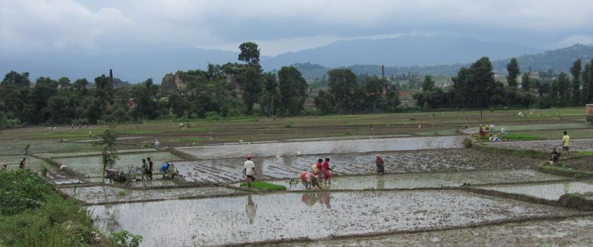 Agricultural Tour in Nepal